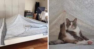 Őrült macskás pillanatok