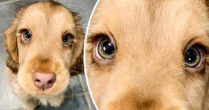 Szívünket elrabló állatok