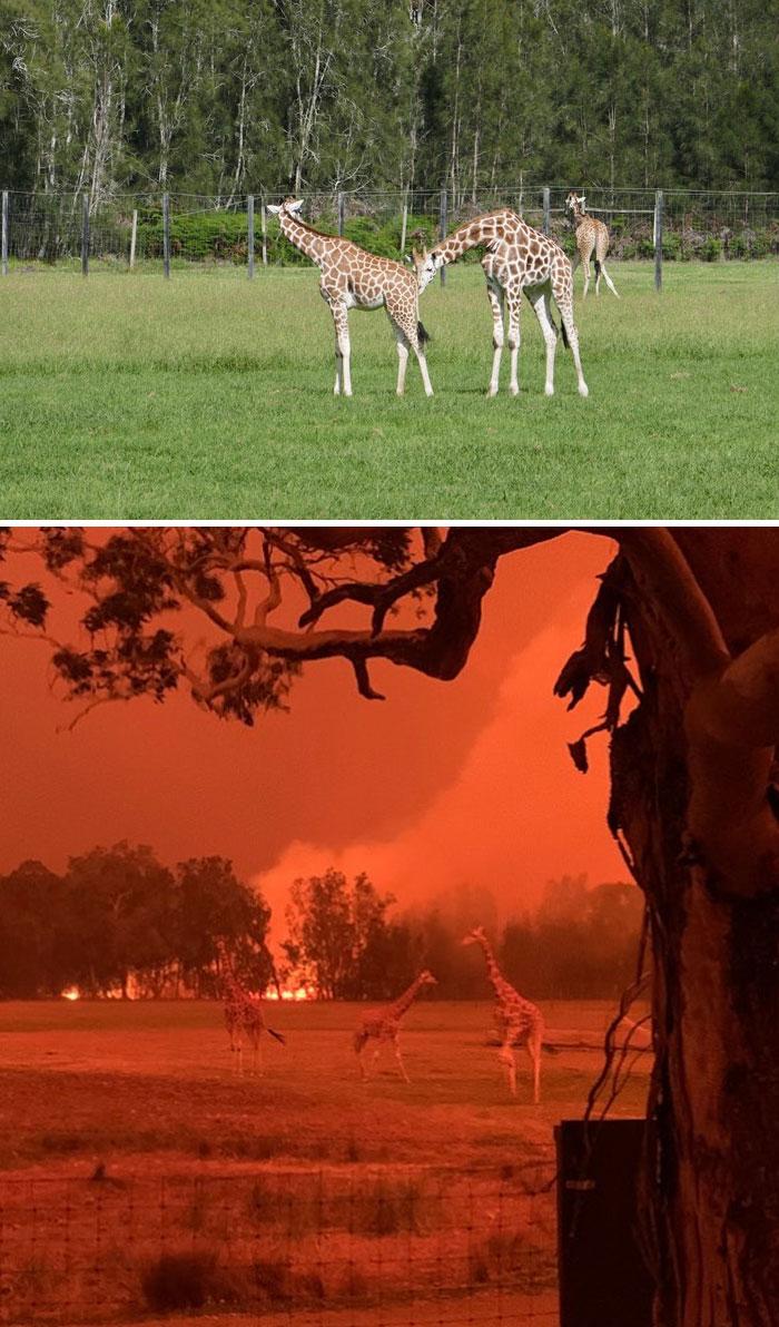 australia bushfires before after photos 22 5e159968b2b49 700