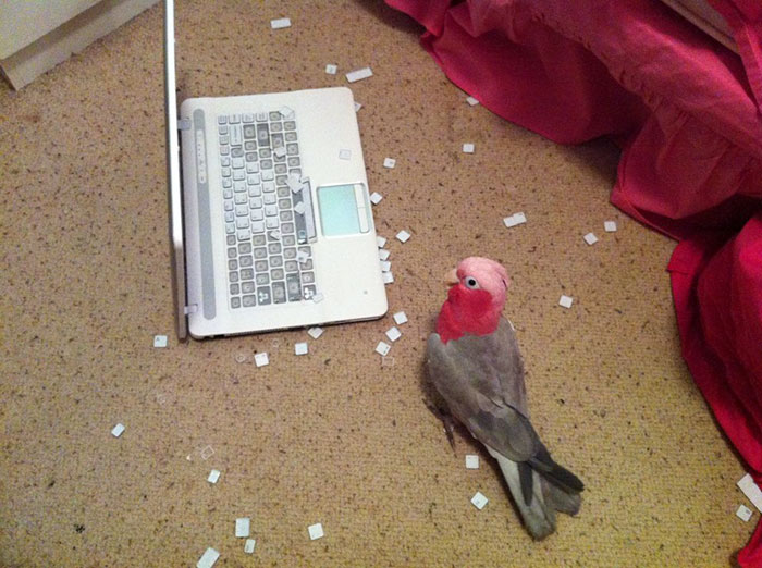 birds being jerks 1 5d5e43636e22f 700
