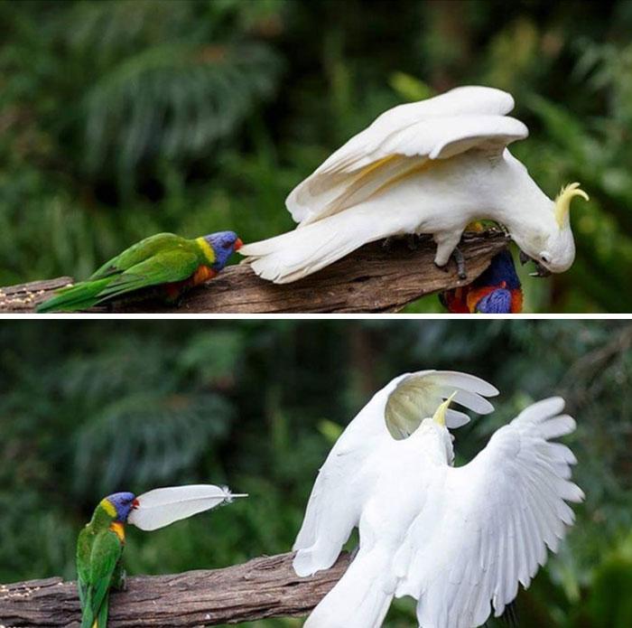 birds being jerks 31 5d5e519b8f3a2 700