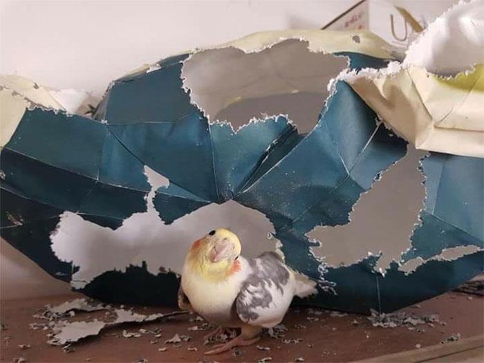 birds being jerks 42 5d5e5c1ceda66 700