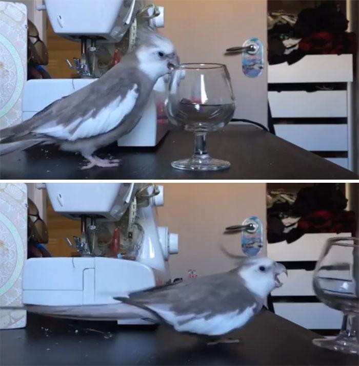 birds being jerks 85 5d5e9fa08b661 700