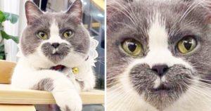 Photoshoppos cicák