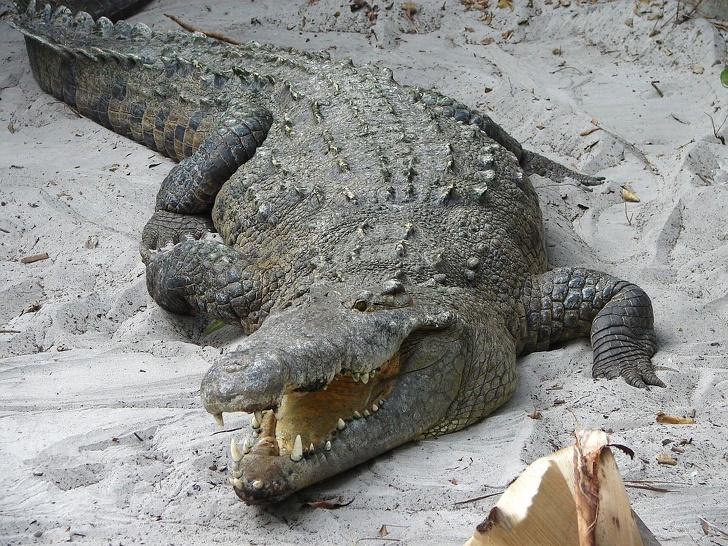 15159910 crocodile 2427 1577443764 728 01e091e8bf 1584975442