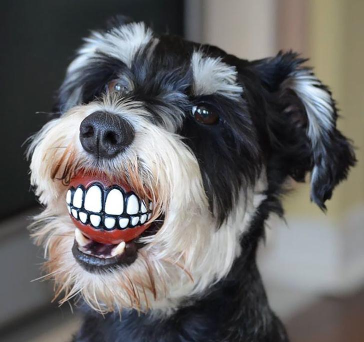 15238564 funny dentist humour 21 59d398d118a9c 605 1582837935 728 baf17fd9da 1583396448