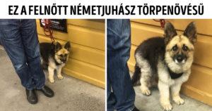 Különleges keverék kutyák