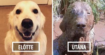 Kutyák a sárfürdő előtt és után