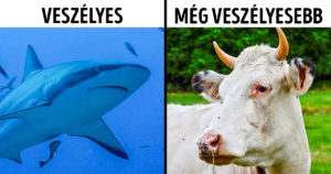 Tények az állatokról