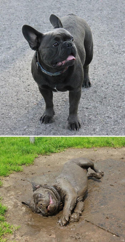 funny dirty dogs 201 5e5915859da80 700