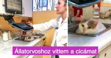 Állatorvosos történetek