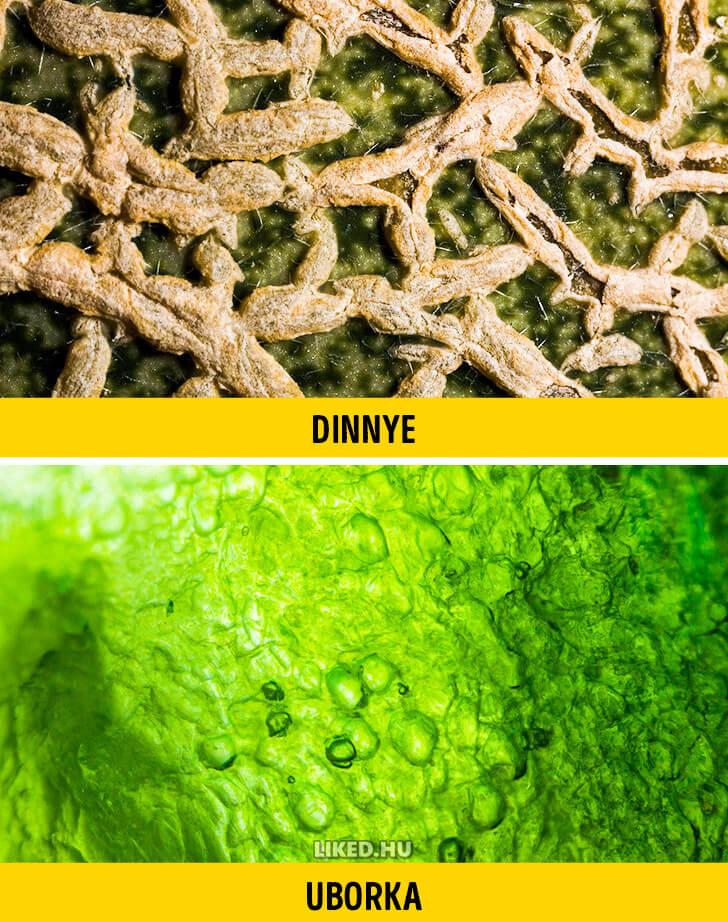 Dinnye vs uborka