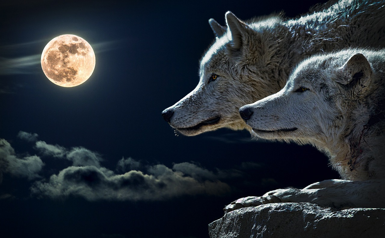 Farkasok és telihold