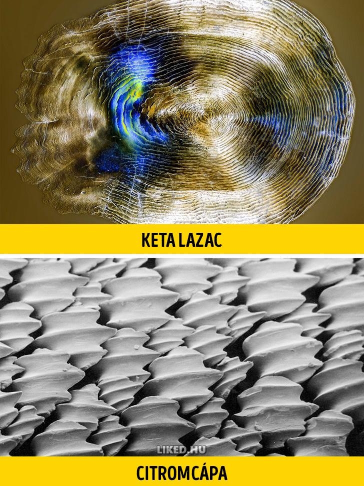 Ketalazac vs citromcapa