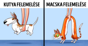 Kutyák és macskák közti különbség