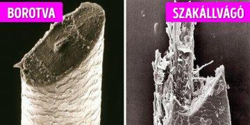 Mikroszkópikus különbségek