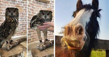 10 érdekes tény az állatokról
