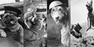 Hős kutyák a második világháborúban