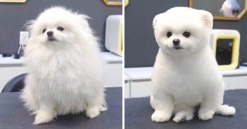 Kozmetikusnál megváltozott kutyusok