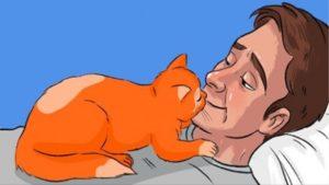 Macskák és a szeretet kifejezése