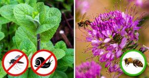 Növények tavaszi ültetéshez