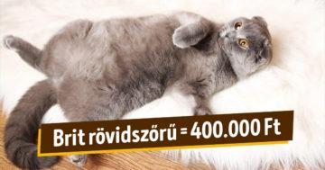 Világ legdrágább macskái