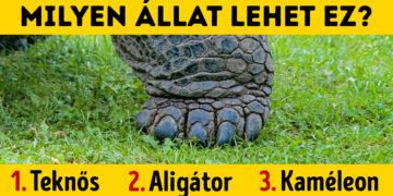 Állat lábak felismerése