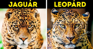 Egymásra hasonlító állatok