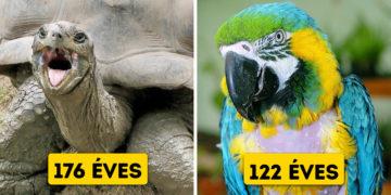 Idős állatok