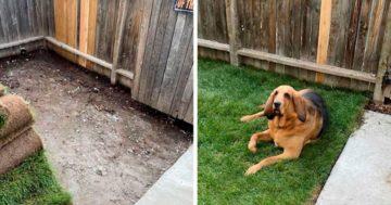 Kutya saját kertje