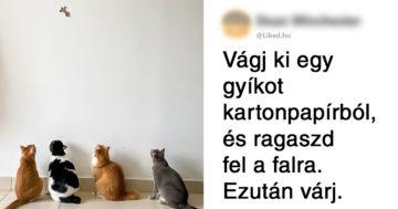 Macskák szórakoztatása