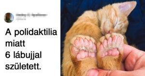 Különleges háziállatok
