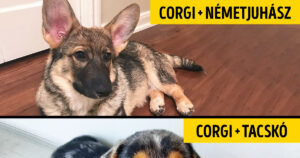 Különleges keverék kutyusok