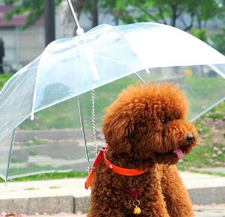 Kutyaesernyő
