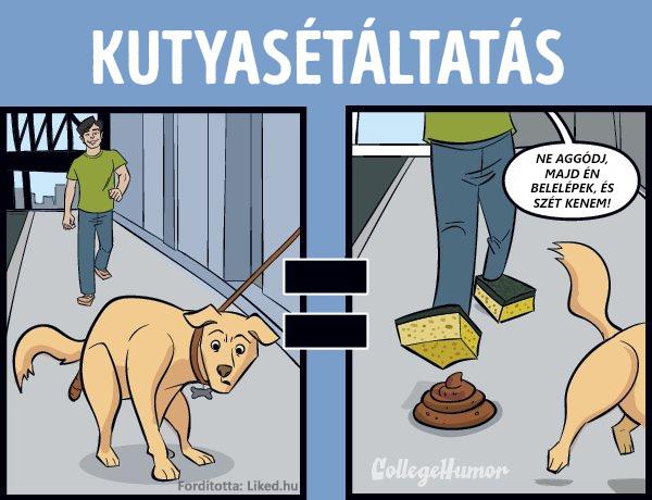 Seggfej kutyasetaltatas