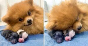 Állat anyukák