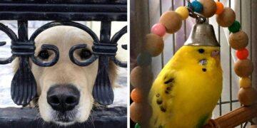 Állatok vicces bohóckodása