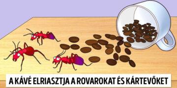 Kávé hasznosítása a ház körül