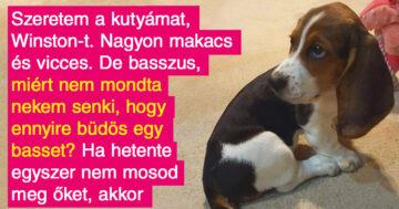 Kutyafajták betegségei