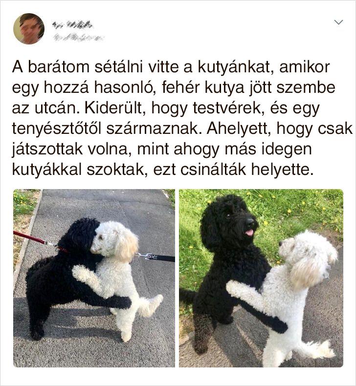 Testver kutyusok