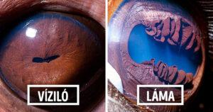 Állatok szeme közelről