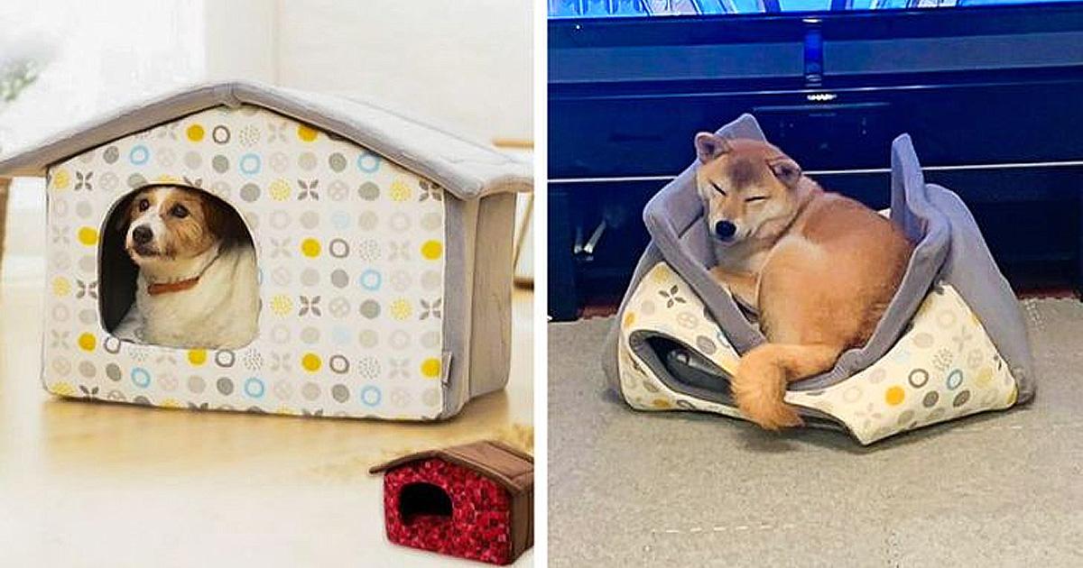Állatoknak ajándék fail