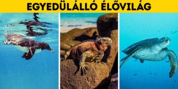 Galápagos szigetek csodái