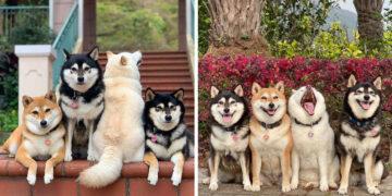Modortalan kutya