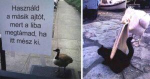 Bunkó madarak