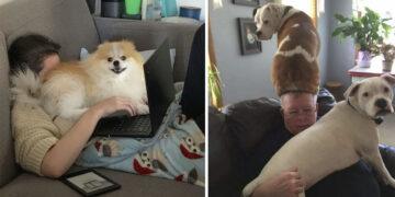 Gazdik figyelmét felhívó kutyák