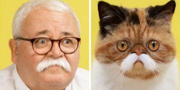 Hasonló emberek és macskák