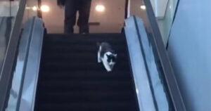Mozgolepcso macska