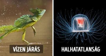 Állatok szuperképességei