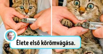 Drámai macskák